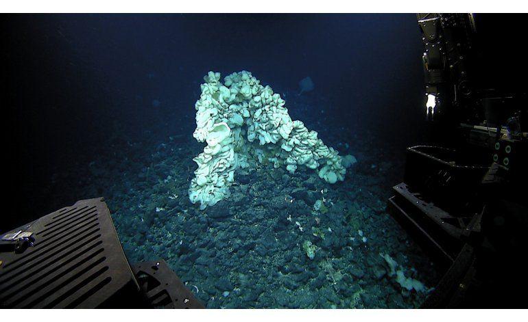 Científicos documentan la esponja marina más grande conocida