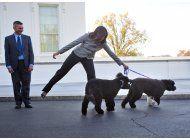 los perros de la familia obama no solo comen y duermen