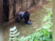 continua la polemica por la muerte de un gorila en zoologico de cincinnati