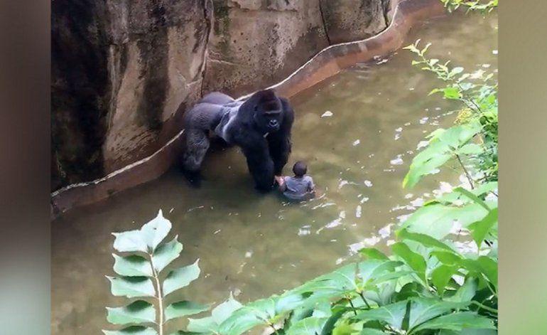 Continúa la polémica por la muerte de un gorila en Zoológico de Cincinnati