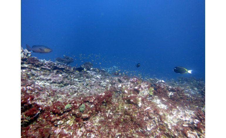 Reserva marina de EEUU ahora es un cementerio de coral