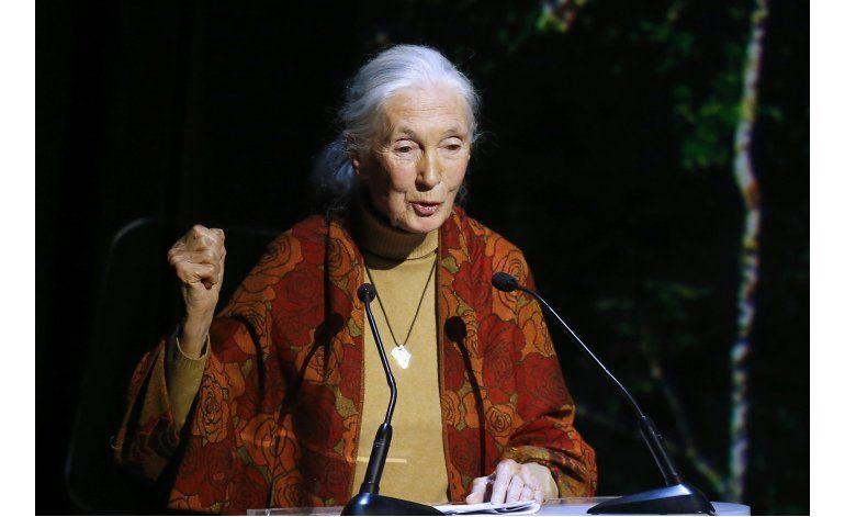 Jane Goodall envía mensaje al director del zoo de Ohio