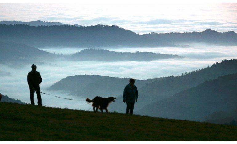 Estudio indica que perro doméstico podrían tener 2 orígenes