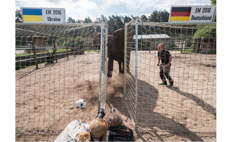 Euro: Elefanta Nelly vaticina triunfo de Alemania