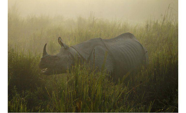 El estado indio de Assam refuerza protección a rinocerontes