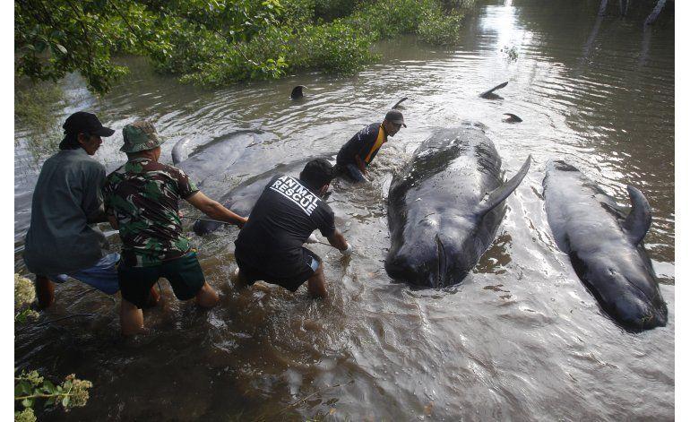 Mueren 10 ballenas varadas en la isla de Java, en Indonesia