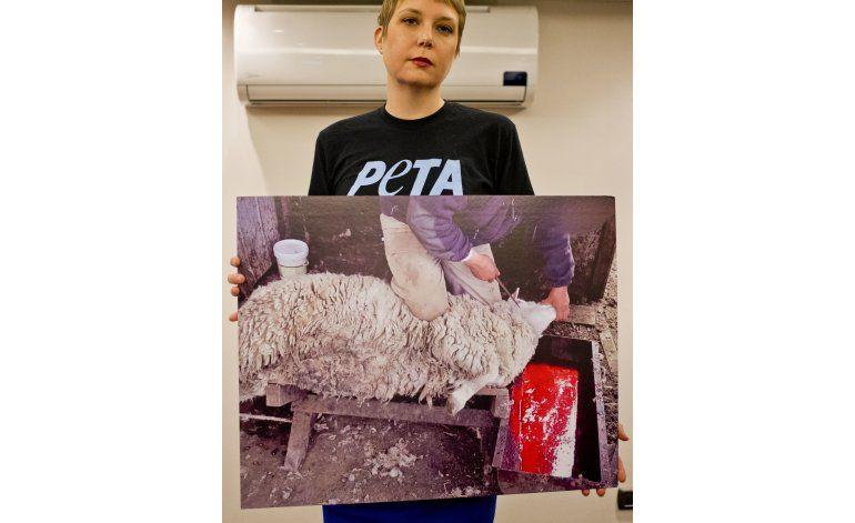 Empresa británica niega maltrato de ovejas en Chile