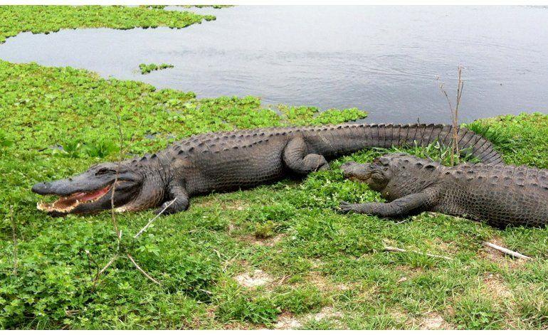 Centro vacacional Disney sopesa advertencias sobre caimanes