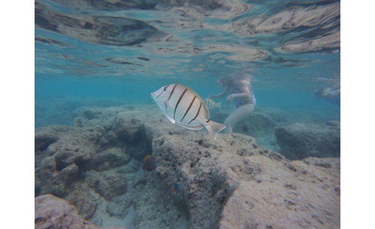 Científicos luchan por salvar los arrecifes de coral