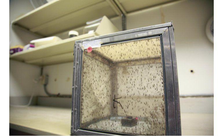 EEUU autoriza pruebas de vacuna del zika en humanos