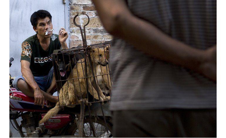 Ciudad china celebra fiesta de carne de perro pese protestas