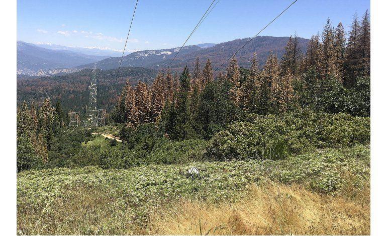 California: Mueren 66 millones de árboles en últimos 6 años