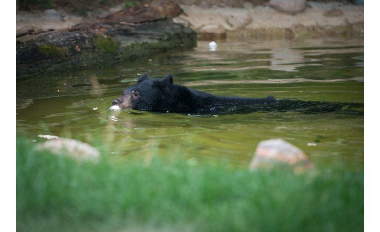 Cachorro de oso se escapa brevemente en zoológico en Ohio