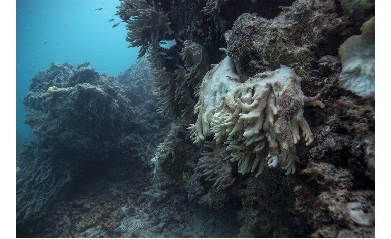 Científicos solicitan a Australia que proteja sus arrecifes