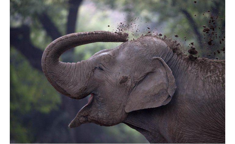 Comienza cambio de zoo de Buenos Aires a parque ecológico