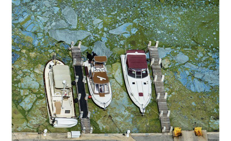 Rubio pide ayuda federal por brote de algas en Florida