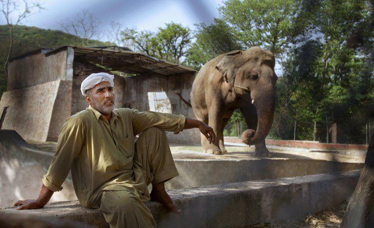 Campaña en defensa de un elefante maltratado en Pakistán