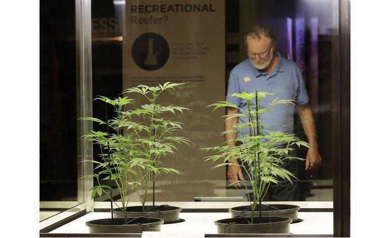 California: Muestra busca provocar polémica sobre marihuana