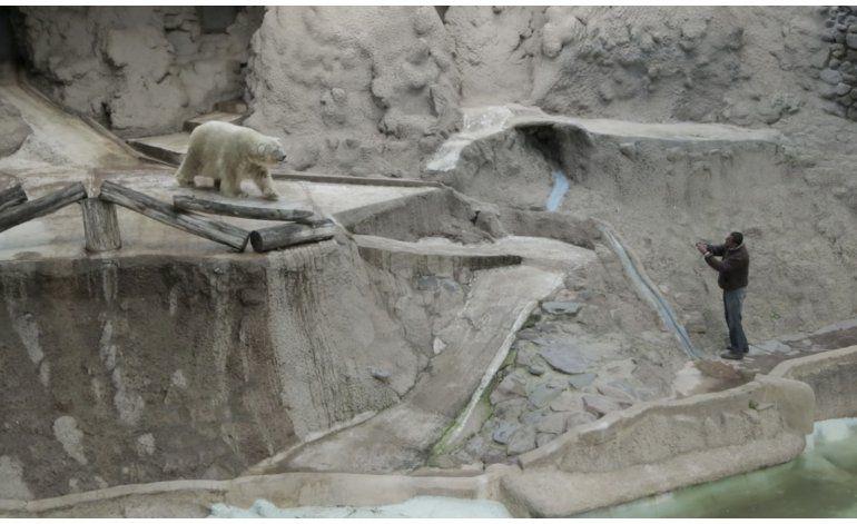 Critican a zoológicos argentinos tras muerte de oso polar