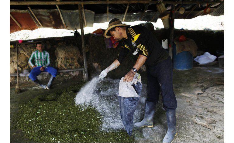 La ruta de la producción de la pasta de coca en Colombia
