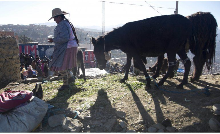 La leche de burra guarda un secreto en Bolivia