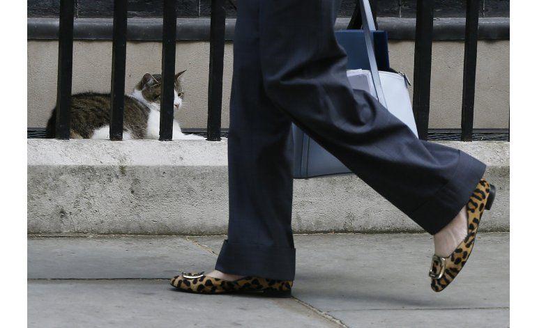 Larry, el gato que vive en el número 10 de Downing Street