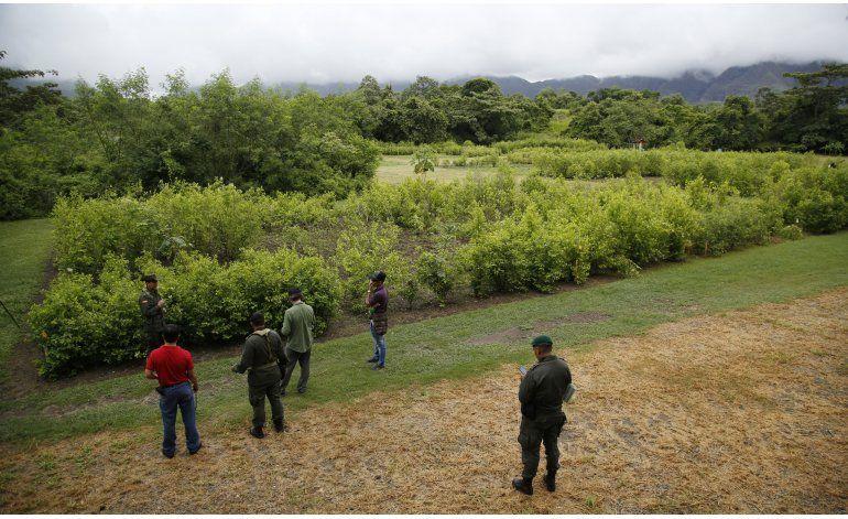 Colombia replantea guerra antidrogas al aumentar cocaína