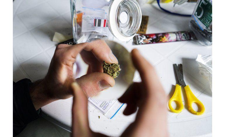 Concurso en Uruguay elige las mejores muestras de marihuana