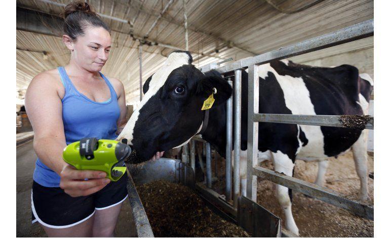 Sensor de movimiento alerta vía celular de vacas de parto