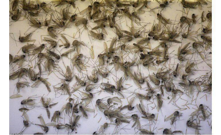 Brasil: Identifican a segundo mosquito transmisor de zika