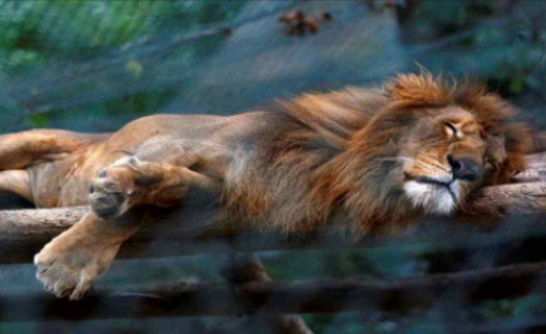 Mueren de hambre animales de los zoológicos en Venezuela