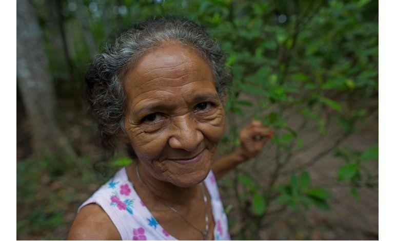 Fotos AP: Culto usa bebida psicodélica en Amazonía brasileña