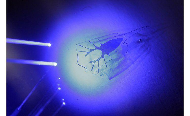 Raya cibernética puede nadar hacia una fuente de luz