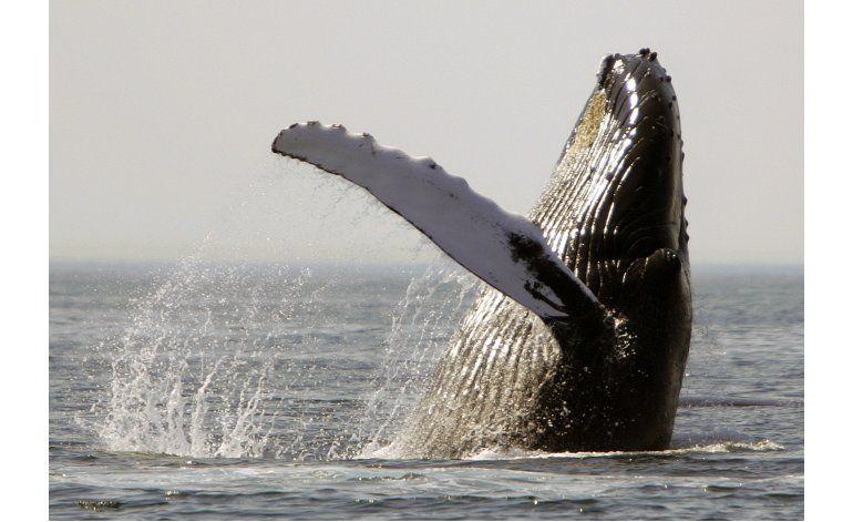 Estudio: Ruido altera hábitos alimenticios de ballenas