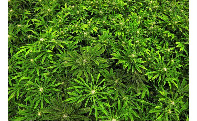 EEUU mantiene a la marihuana en la lista drogas peligrosas