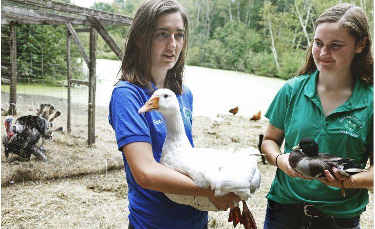 Aves regresan a ferias de EEUU tras epidemia de gripe aviar
