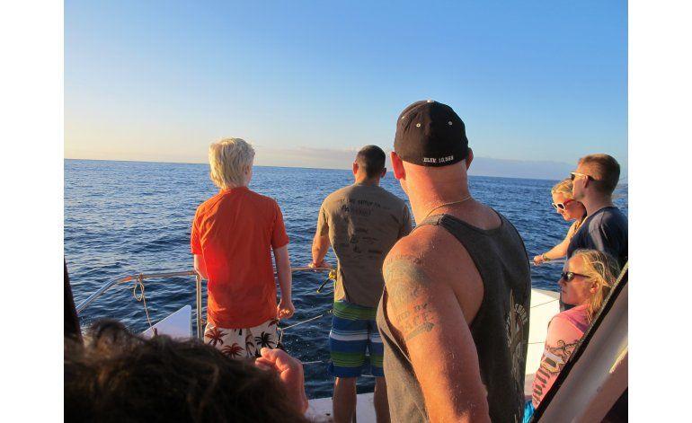 Propondrán vetar nado con delfines en Hawai