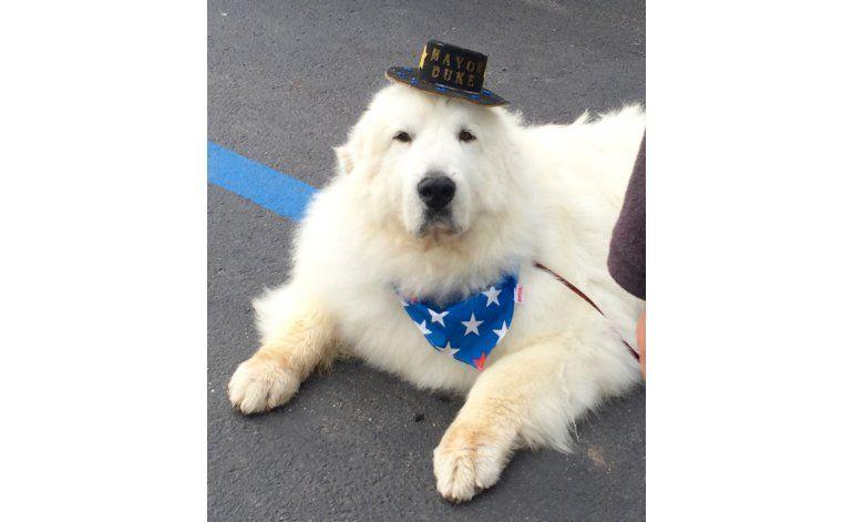 Pueblo de Minnesota reelige a perro como alcalde honorario
