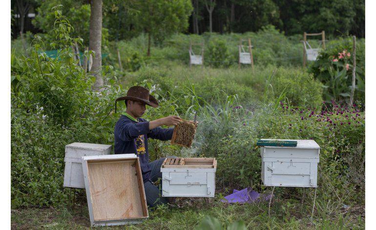 Campesinos tailandeses combaten a elefantes con abejas