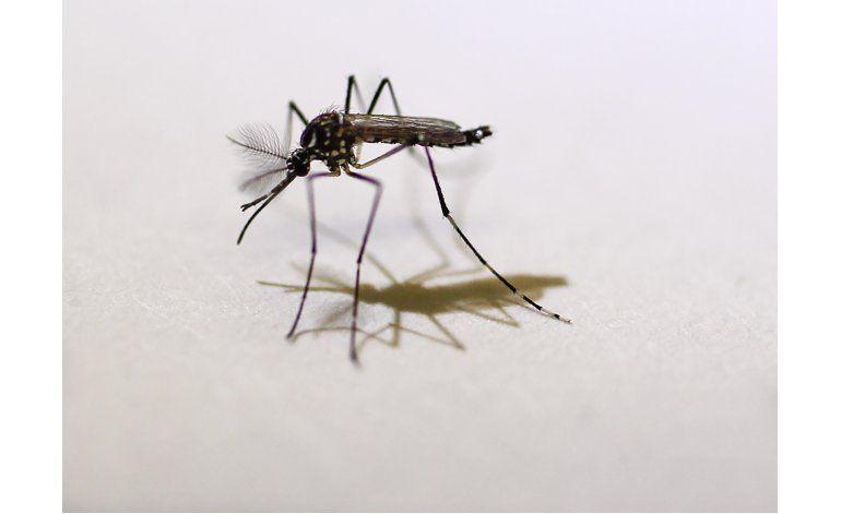 OMS: No hay casos de zika vinculados con Juegos Olímpicos