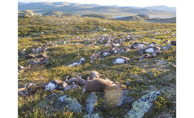Rayos matan más de 300 renos en Noruega