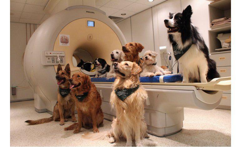 Estudio: Los perros saben qué les dicen sus dueños