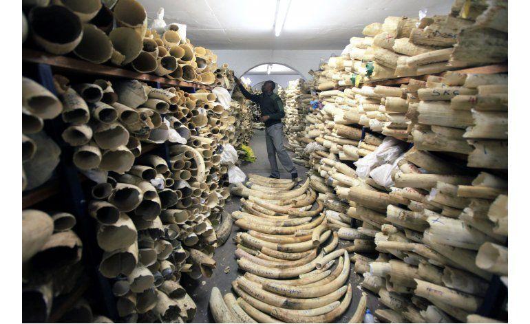 Revelan rápido declive en población de elefantes africanos