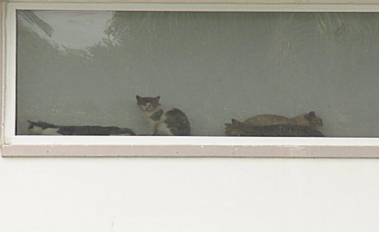 Encuentran a decenas de animales en pésimas condiciones en una residencia en el sur de la Florida