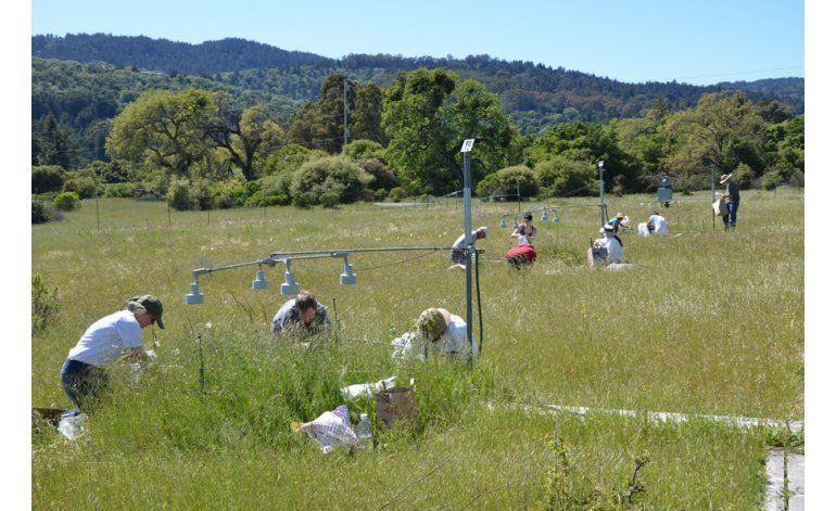 Experimento descarta Tierra más verde por el calentamiento