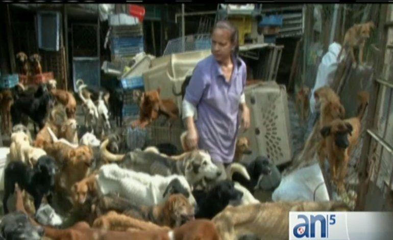 Venezuela: crece el numero de perros y gatos abandonados