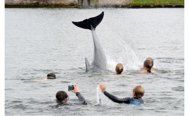 Delfín amistoso conquista a bañistas en el norte de Alemania