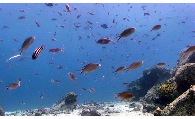 Un nombre famoso e impresión 3D para ayudar a coral caribeño