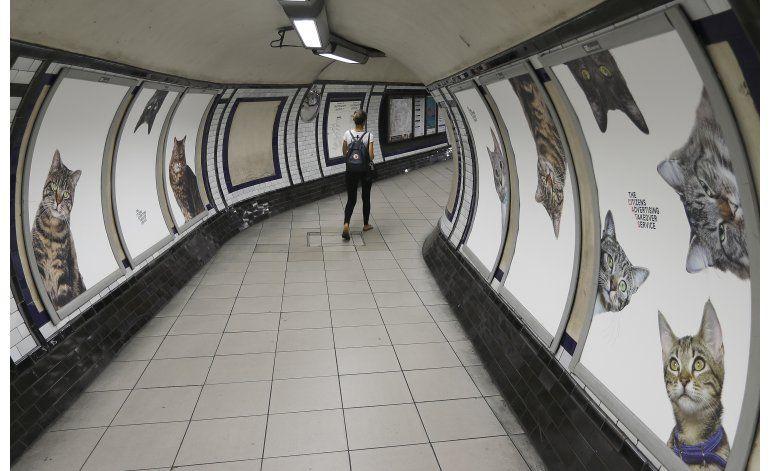 Anuncios de gatos inundan una estación del metro de Londres