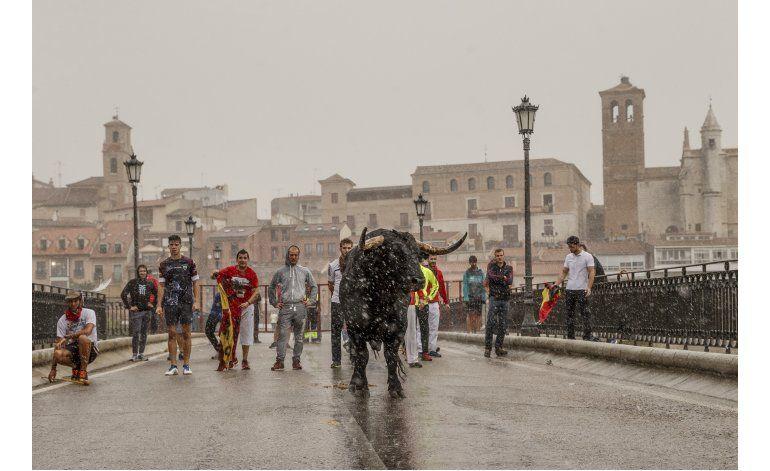 Defensores de animales y taurinos se enfrentan en España